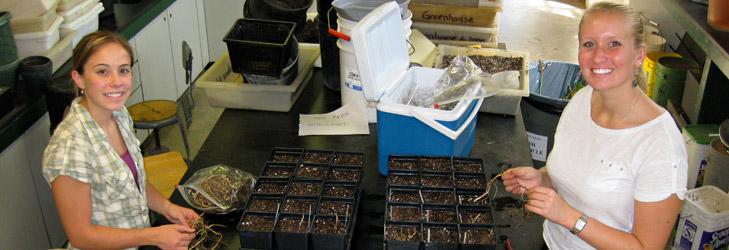 Planting-Rhizomes729x250