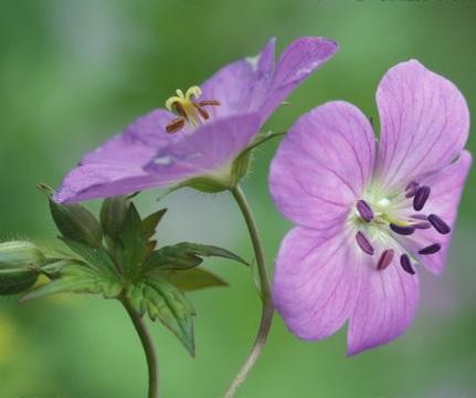 6_Wildflowers_1082thumb